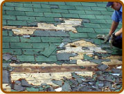 Damage to roof by raccoons