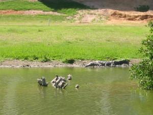 Pureto Vallarta Golf Course