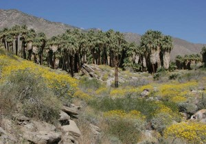 Palm Springs Hiking